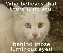 Loss Of A Cat Quotes Interesting Quotes About Cat Death For You To Kiss Away The Pain EnkiQuotes
