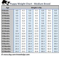 Bullmastiff Size Chart Dog Size Comparison Chart 2019