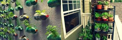 apartment vegetable garden. Perfect Garden Here Are A Few Great U201cgrowing Vegetables In Apartmentu201d Ideas To Get You  Started Inside Apartment Vegetable Garden R