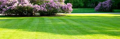 A Guide To Spring Lawn Feeding And Care Lovethegarden