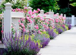 flower garden design. Salvias (the Purple Flower In The Photo) Are One Of Best Groups Flowers For Honeybees And Bumblebees. White Fence Bed With Pink Roses, Garden Design
