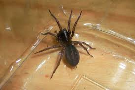 Michigan Spiders Identification Chart 22 Of The Spiders You Might Find In Michigan And One You