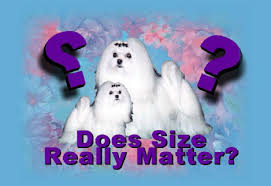 Teacup Maltese Weight Chart Maltese Dog And Puppy Size Weight Does It Matter