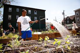 mill city grows can help start coordinate and implement community gardens in lowell contact us at gardens at millcitygrows dot org