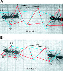 An Ant Walks On A Piece Of Graph Paper Magdalene Project Org