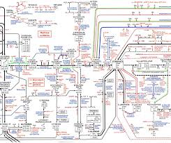 1 Parts Of The Metabolic Pathways Poster Download