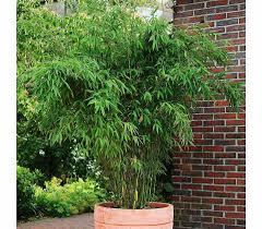 Schirm Bambus Jumbo Dehner Garten Center Einrichtung Ideen Sichtschutz Garten Dehner