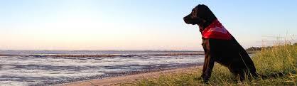 Urlaub Mit Hund An Der Ostsee In Ferienwohnungferienhaus