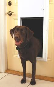 electronic dog doors. Tempting Electronic Dog Door By Petsafe Fully Automatic Doors Large In L