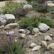 Small Picture Patio Outdoor Considering Drought Tolerant Landscaping For