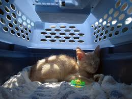 Choosing the Right <b>Cat</b> Carrier | Animal Hospital of North Asheville ...