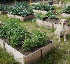 how to make a raised garden. But Often A Cedar Raised Bed Can Cost Hundreds Of Dollars. With This Plan, I Figured Out How To Create Beds - Deep Ones For About $10 Each. Make Garden