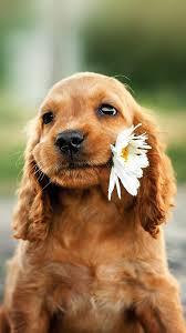 Cute puppy wallpaper ...