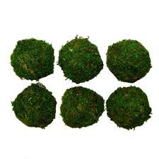 Decorative Moss Balls Dried Decorative Balls Baisch and Skinner 84
