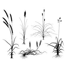 tall grass silhouette. Tall Grass Silhouette Vector - Google Search R