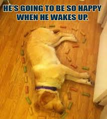 Sleeping Dog Meme | Funny Pictures, Quotes, Memes, Jokes via Relatably.com