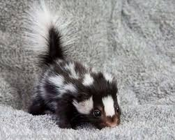 Image result for baby animals images