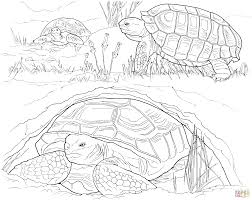Small Picture Baby Turtle Hatching from Egg coloring page Free Printable