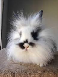 baby rabbits for free. cheyenne rabbits for sale classifieds online free ads, wyoming baby