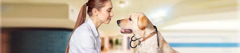 veterinary pet clinic in garden city mi garden city veterinary hospital