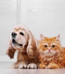 Columbia Pet Surrender Petsinc