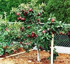 Blog U2013 Page 2 U2013 The Fruit NutFruit Trees In Michigan