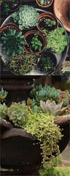 best soil for planting succulents