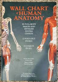 Wall Chart Of Human Anatomy Wall Chart Of Human Anatomy 3 D Full Body Images Detailed System Charts Vgc