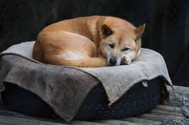 Natural Ringworm Remedies in Dogs - Procedure, Efficacy, Recovery ...