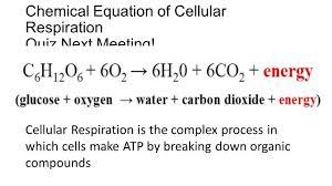chemical equation of cellular respiration quiz next meeting