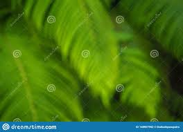 Green Plants With A Blurry Background ...