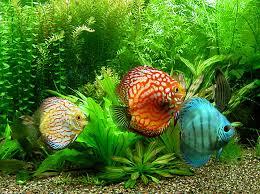 أسماك جميلة جداً ذو الوان خلابة
