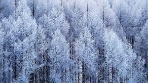少納言よ、香炉峰の雪いかならむ 品詞分解
