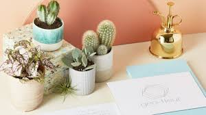 How Not To Kill Your Houseplants In The Winter Grazia