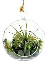 air plant terrarium kit hanging diy
