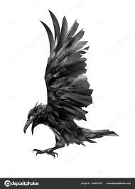 полет ворона рисунок изолированные эскиз птицы стоковое фото