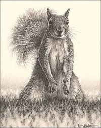 Small Picture Looking for Lunch Grey Squirrel Fine Art Pencil Drawings