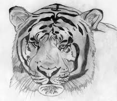 the vanishing tigers teen essay about endangered extinct species the vanishing tigers