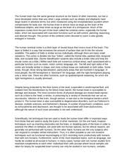psy general psychology colorado state page course 2 pages human brain essay