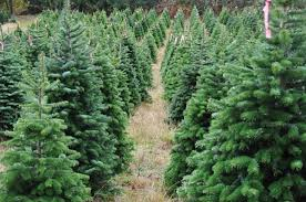 Valley Christmas TreesValley Christmas Tree Farm