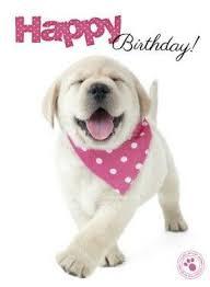 hello this is dog happy birthday. happy birthday! hello this is dog birthday