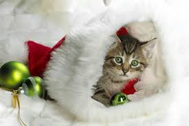 cute animal christmas backgrounds. Wonderful Animal Wallpapers Lund Boor Pr News Picture Savile Tsunami  Wallpapers Inside Cute Animal Christmas Backgrounds E