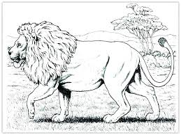 mountain lion coloring pages mountain n coloring page pages animals realistic famous baby mountain lion coloring