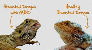 Bearded Dragon Age Weight Chart Bearded Dragon Weight Chart
