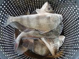 Texas Fish Chart Texas Surf Fishing Excellent During Fall Winter For