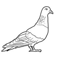 Small Picture Alluring Pigeon Coloring Pages 23 mosatt