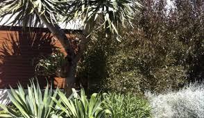 Small Picture Life Garden Designs Landscaping Landscape Design Somerton Park