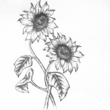 Double Sunflower Tattoo Sketches
