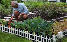 Kitchen Gardens In India How To Create A Pretty Vegetable Garden The Kansas City Star