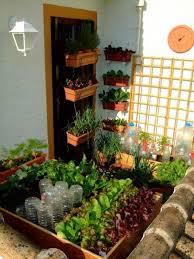 balcony garden growing vegetables
